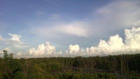 Niebo bielu chmury namorzynowy las i drewno most zdjęcia royalty free