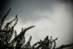 niebo burzy drzewo Obrazy Stock