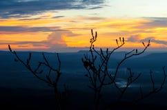 Niebo, chmura, słońce i drzewo Zdjęcie Royalty Free