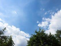 Niebo i chmura nad drzewami Zdjęcie Royalty Free