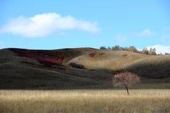 Niebo i chmury nad wyż z jesieni drzewami fotografia stock