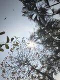 Niebo i drzewo fotografia stock