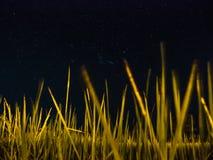 Niebo i gwiazdy przy polem obrazy stock