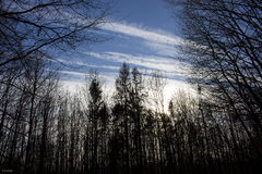 Niebo i las Obrazy Stock