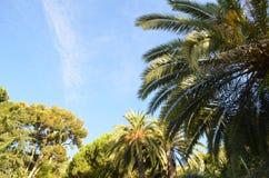 Niebo i palmy obrazy royalty free