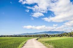 Niebo i pola ryżowi Zdjęcia Royalty Free