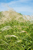 Niebo i trawa w jesieni Zdjęcie Royalty Free