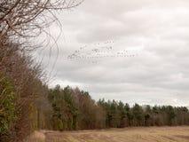 niebo kierdel ptak chmurna markotna chmurząca pogodowa migracja zdjęcia stock
