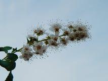 Niebo kwiaty Fotografia Royalty Free