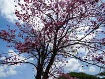 Niebo kwiaty Obraz Royalty Free