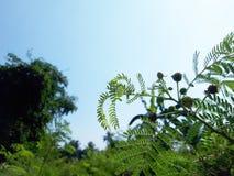 Niebo liście w ogródzie zdjęcie royalty free