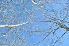 Niebo od podłoga Zdjęcie Royalty Free
