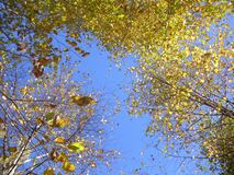 Niebo oddycha w jesieni obrazy stock