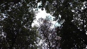 Niebo przez drzewa Obrazy Royalty Free