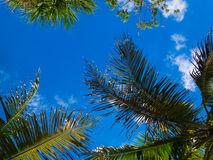 Niebo przez drzewek palmowych Obraz Stock