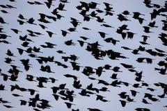 Niebo ptaki obrazy royalty free