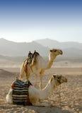 niebo pustynny panoramiczny widok Obrazy Stock