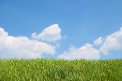 niebo trawy zdjęcia royalty free