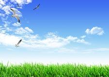 Niebo trawy ptak Obraz Royalty Free