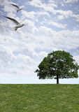 Niebo trawy ptak Fotografia Stock