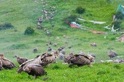 Niebo tybetański pogrzeb obrazy stock