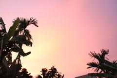 Niebo wyrównuje wieczór zdjęcie stock