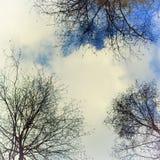 Niebo z chmurami i drzewami Obrazy Royalty Free