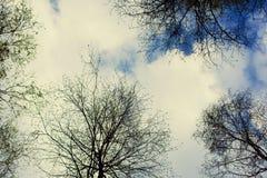 Niebo z chmurami i drzewami Fotografia Stock