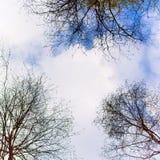 Niebo z chmurami i drzewami Fotografia Royalty Free