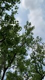 Niebo z drzewami marzy wpólnie zbiory wideo