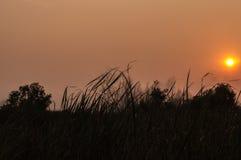 Niebo z drzewną sylwetką wzdłuż dna Fotografia Stock