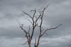 Nieboszczyk i suchy drzewo, sztuki natura Zdjęcie Stock