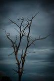 Nieboszczyk i suchy drzewo, sztuki natura Obraz Royalty Free
