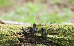 Nieboszczyk obsługuje palec pieczarki na spadać drzewie zdjęcia stock