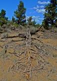 Nieboszczyk w pustyni Obraz Stock