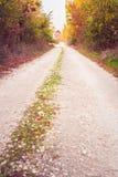 Niebrukowana wiejska droga w jesieni Zdjęcia Royalty Free