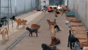 Niechciani i bezdomni psy różni trakeny w zwierzęcym schronieniu Patrzejący ludzie przychodzić i czekać na adoptuje schronienia zbiory