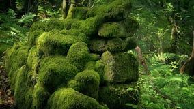 Niecka Przez Antyczną Mechatą Kamienną ścianę W drewnach zbiory