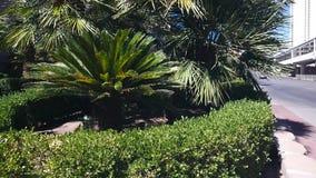 Niecka strzał roślina w mieście zdjęcie wideo
