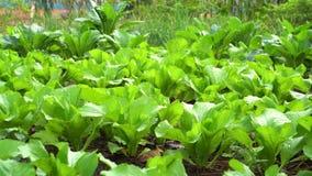Niecka strzelająca warzywo w jarzynowym ogródzie zdjęcie wideo