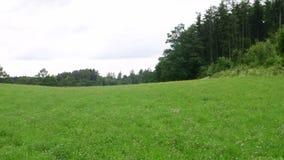 Niecka widok lato krajobraz Monaster w tle zdjęcie wideo