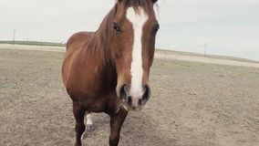 Niecka Wokoło Brown I Białego konia zdjęcie wideo