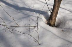 Niecki w wczesnym wiosna lesie obraz stock