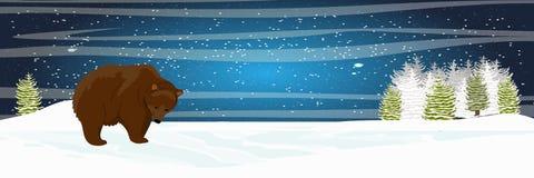 Niedźwiedź brunatny chodzi w łące Świerkowa lasowa Starlight noc royalty ilustracja