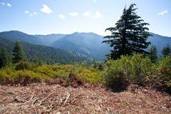 niedźwiadkowa obozowa droga zdjęcie royalty free
