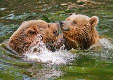 Niedźwiadkowe gry Fotografia Royalty Free