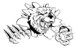 Niedźwiadkowego pazura przełom Zdjęcie Royalty Free