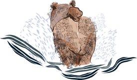 Niedźwiadkowy kąpanie plecy obraz royalty free