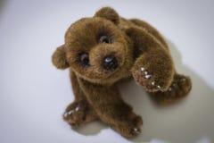 niedźwiadkowy miś pluszowy Obraz Stock
