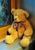 niedźwiadkowy patrzejący patrzeć okno Zdjęcie Stock